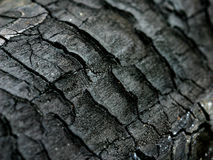 Charred Wood. Texture royalty free stock photos