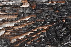 Charred wood board Royalty Free Stock Images