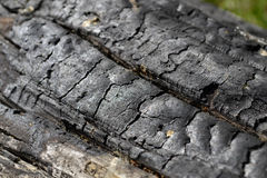 Charred wood with cracks Royalty Free Stock Photography