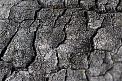 Charred wood with cracks Stock Images