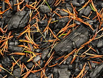 A charred wood sprinkled with spruce pine needles Stock Photo