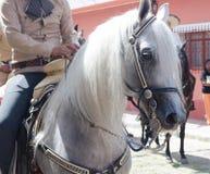 Charro en caballos Fotografía de archivo libre de regalías