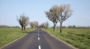 charry τρόπος δέντρων άνοιξη Στοκ φωτογραφία με δικαίωμα ελεύθερης χρήσης