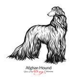 Chart afgański Czarny i biały graficzny rysunek pies Obraz Royalty Free
