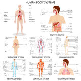 Chart of different Human Organ System. Vector illustration of complete chart of different human organ system stock illustration
