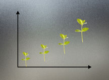 Chart of growth plants. On glass Royalty Free Stock Image