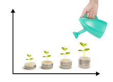 Chart of growth plants. Investment with chart of growth plants Stock Images