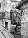 Chartres-Wald Lizenzfreies Stockfoto