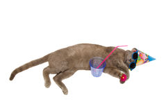 Chartreux cat take a summer drink royalty free stock photos