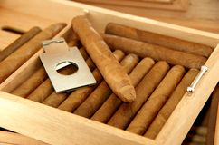 Charutos no humidor Foto de Stock Royalty Free