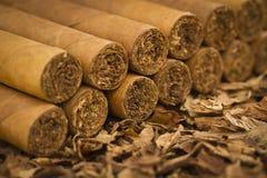 Charutos no tabaco fotografia de stock royalty free