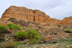 Charyn canyon in spring Stock Images