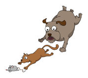 Chase. Dog cat and mouse chasing together Royalty Free Stock Photography