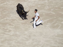 Chased by the bull Stock Photos