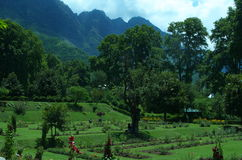 Chashmeshahi-Garten-Landschaft in Srinagar-12 Lizenzfreies Stockfoto
