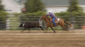 Chasing Down the Cow Panning and Motion Blur Stock Photography