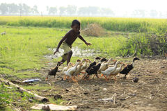 Chasing the duckling. Boundless joy of childhood. Royalty Free Stock Photo