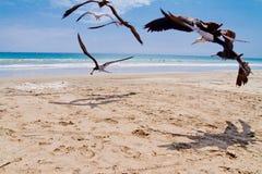 Chasing Seagulls Stock Image