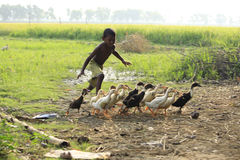 Free Chasing The Duckling. Boundless Joy Of Childhood. Royalty Free Stock Photo - 77900265