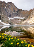 Chasm Lake and Wildflowers Below The Diamond Face of Longs Peak. Royalty Free Stock Images