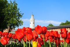 Chasozvonya of St. Sophia Cathedral, Veliky Novgorod (Russia). Chasozvonya (Clock tower) of Saint Sophia Cathedral and red tulips on the foreground in Veliky Royalty Free Stock Photography
