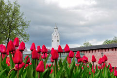 Chasozvonya of St. Sophia Cathedral, Veliky Novgorod (Russia). Chasozvonya (Clock tower) of Saint Sophia Cathedral and red tulips on the foreground in Veliky Stock Image