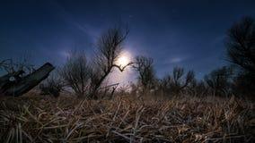 Chassant la lune - paysage de pleine lune de nuit Image stock