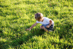 Chasse à Grasshoper Image stock