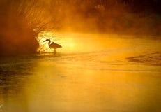 chasse Image libre de droits