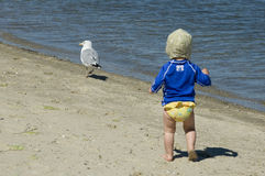 Chasse d'une mouette Images stock