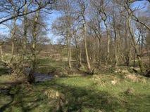 Chasse de Cannock Image libre de droits