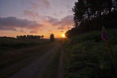 Chasse de Cannock Photographie stock