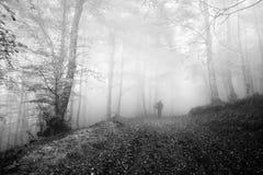 Chasse de champignon de personne dans la forêt pendant le matin image stock