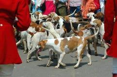 Chasse des chiens Photos libres de droits