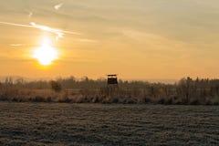 Chasse du bryony dans le surise dans la température froide photos stock