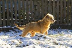 Chasse du chien de support Image libre de droits