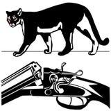 Chasse du puma américain de puma sauvage de puma de fusil Image libre de droits