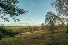 Chasse Forest In Autumn de Cannock Photographie stock