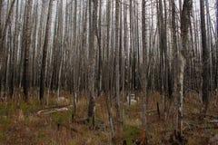 Chasse par des arbres Photo stock