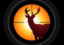 Chasseur de cerfs communs Images libres de droits