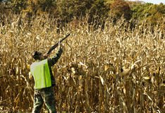Chasseur de champ de maïs Image stock