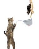 Chasseur de rats intelligent de chat photo stock