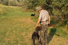 Chasseurs avec une arme à feu et un drathaar allemand Chasse de pigeon avec des chiens S image libre de droits
