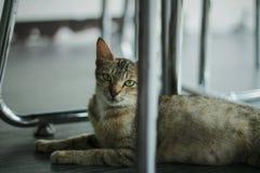 Chat à l'oeil vif Photographie stock libre de droits