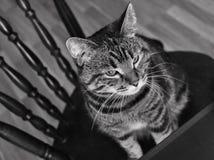 Chat à la maison image libre de droits