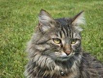 Chat à la maison dans l'herbe Photos stock