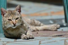chat à reposer sur le soleil images stock