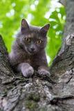 Chat à un arbre Images stock