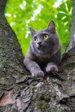 Chat à un arbre Photographie stock libre de droits