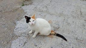 Chat égaré blanc Photo libre de droits